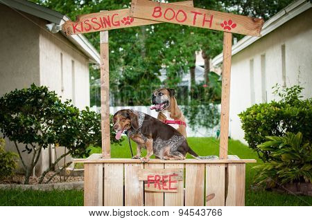 A beagle and boxer dog sitting in a kissing booth