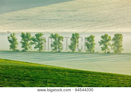 Moravian rolling landscape with trees in early morning haze. Moravia, Czech Republic. soft focus