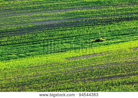 European rural wallpaper - Moravian ploughed field with furrows and sprouts , Moravia, Czech Republic