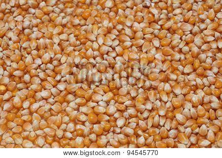 Corn Seeds Texture - Horizontal