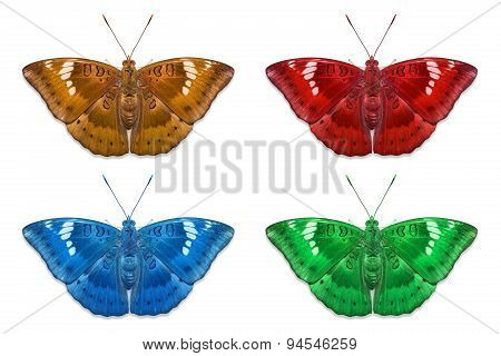 Fancy Color Mango Baron Butterflies