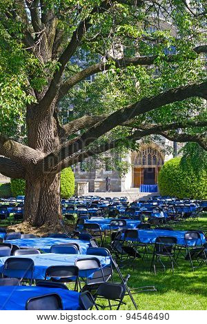 Tables and chairs on a lawn under old tree.