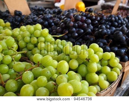 Green And Purple Grape Bunches