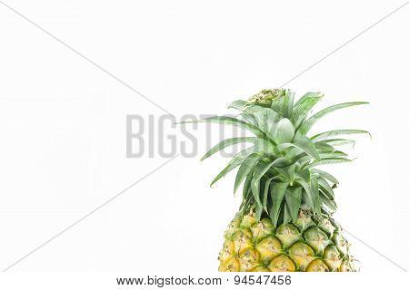 Head of pineapple