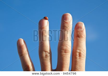 Ladybird On A Stretched Finger