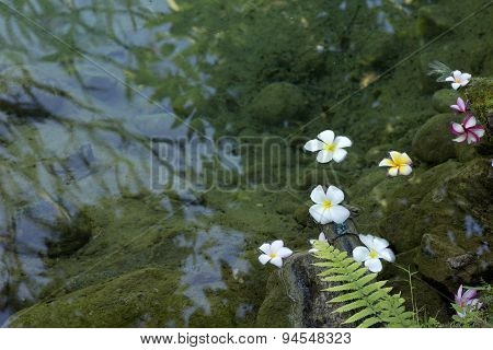 Lichen Flower Water