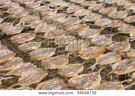 Fish Dried On Nylon