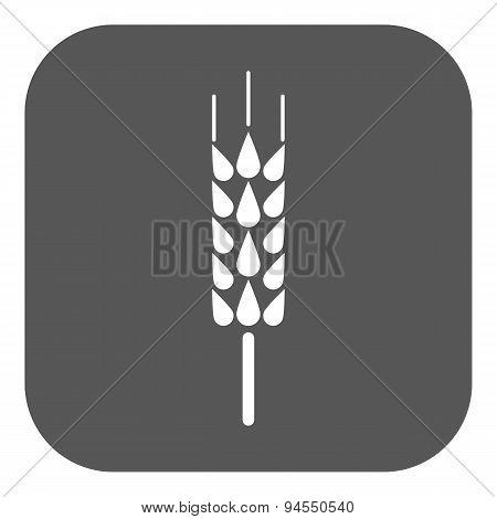 The Spica Icon. Wheat Symbol. Flat