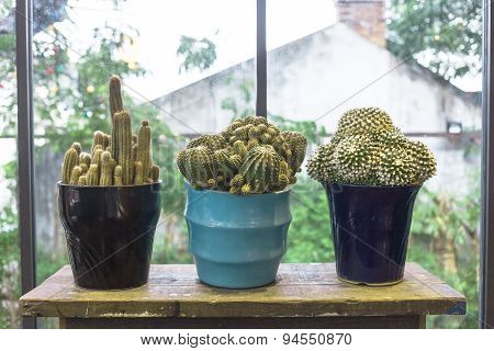 Cactuses On Wood Table In Home