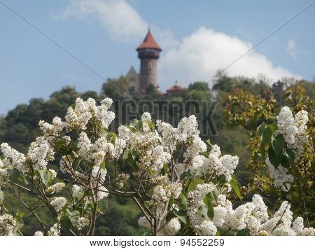 White Lilac Bush With Castle On Background