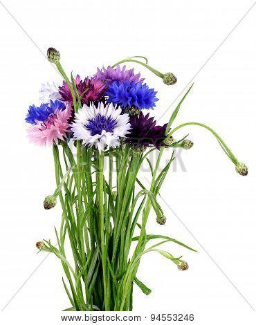 Bouquet Of Cornflowers In A Porcelain Vase.