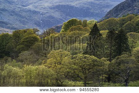 Forest Landscape Next To Coniston Water In Lake District With Mountain Behind