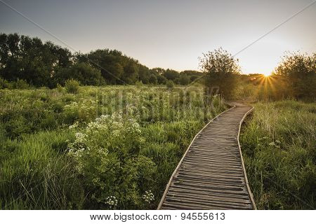 Footpath Leading Through Wild Meadow Sunrise Landscape In Summer
