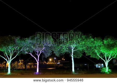 Illuminating trees along the roadside