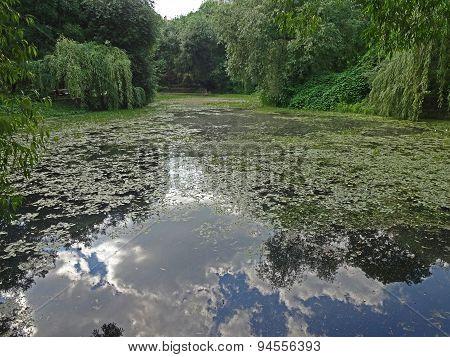 Old abandoned pond