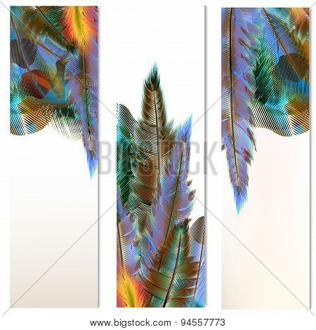 Brochures Set With Colorful Feathers