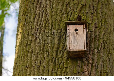 Nest Box On A Tree