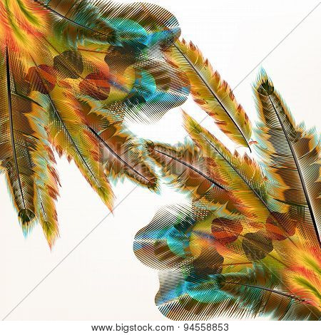 Colorful Background With Birds Feathers