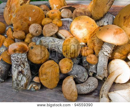 Orange-cap boletus harvest on the table