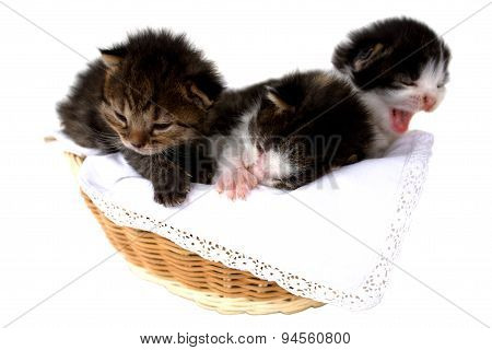 Kitten In A Basket