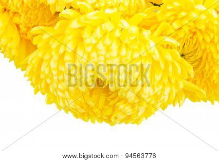 Border of yellow mum flowers