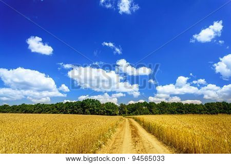 Wonderful Golden Wheat Field.