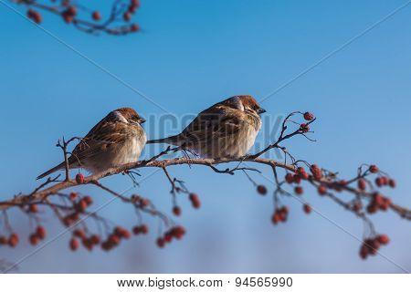 Feeding Of Birds