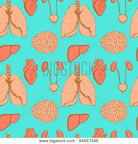 Sketch liver, kidneys, brain, lungs and heart