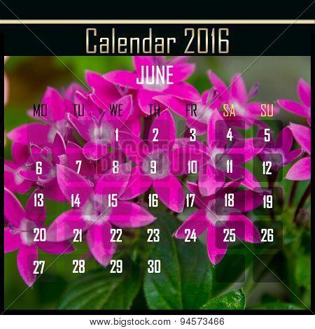 Floral 2016 Calendar Design For June