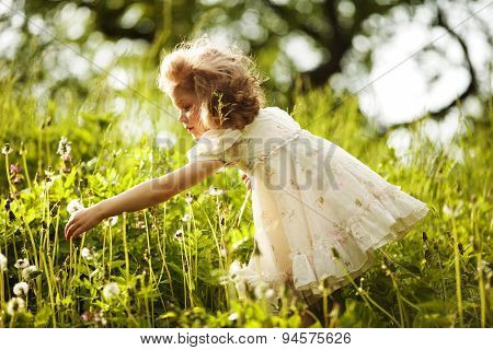 Little Happy Curly Girl Collects Dandelions