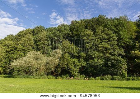 Summer Landscape In Bavaria