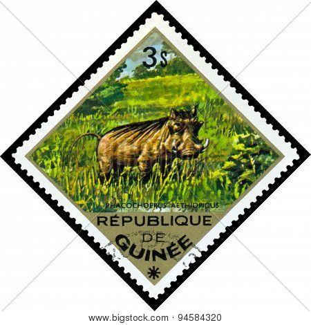 Vintage  Postage Stamp. Desert  Warthog.