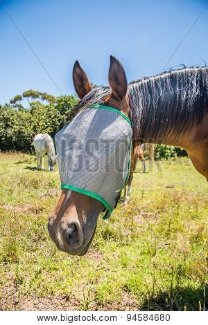 Horse With Flynet Over Face