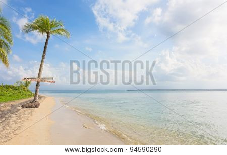 Single palm tree in exotic tropical beach