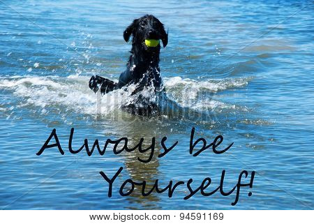 Dog Play With Ball In Water Quote Always Yourself