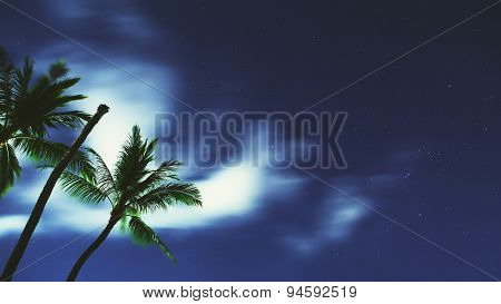 Tropical Night Sky