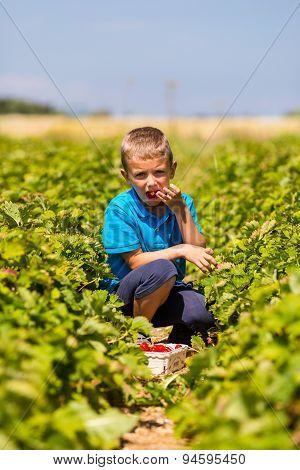 Boy Eating Fresh Strawberry