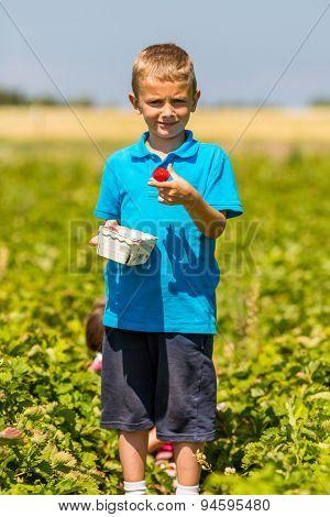 Boy Holding A Fresh Strawberry
