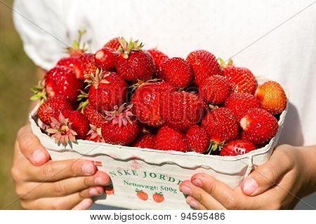 Box With Fresh Strawberries