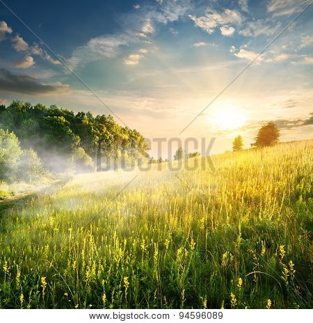 Morning over blossoming field