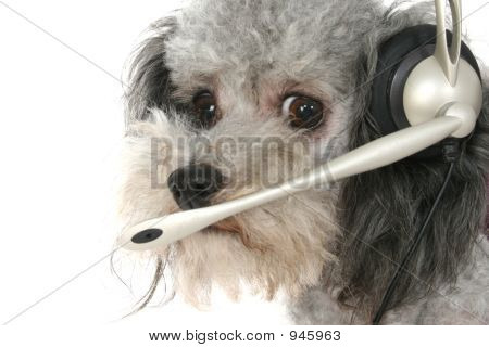 Customer Service Poodle