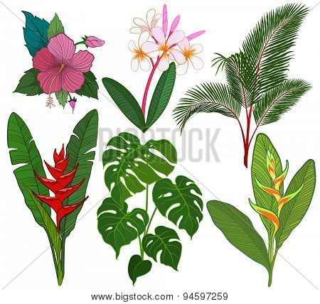 Tropical leaves and flowers vector illustration