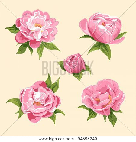 floral background of bright peonies
