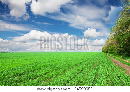 Countryside road between green grass field and forest