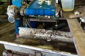 stock photo of chicory  - dirty production line in a chicory factory - JPG