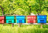 stock photo of beehives  - Row of blue cherry red cyan turquoise and garnet red wooden beehives with trees in the background - JPG