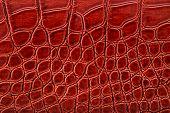 image of crocodile  - Brown crocodile leather imitation - JPG