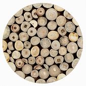 picture of cross-section  - Texture of wood plate Teak branches Cross section circle form in square format - JPG