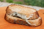 stock photo of taint  - The old black mold on the bread - JPG
