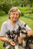 stock photo of schnauzer  - Senior woman hugs her two pets black and silver miniature schnauzer dog in countryside - JPG
